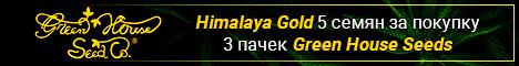 При покупке 3х любых пачек вы получаете пачка Himalaya Gold 5 семян фем