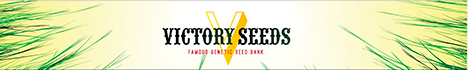Victory Seeds - ������������� ������� !