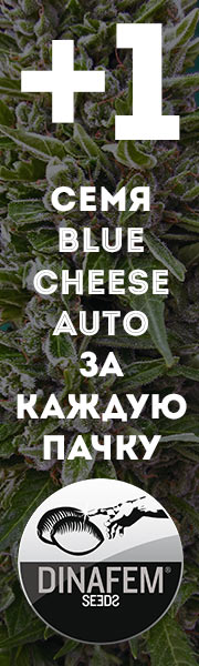 Бонус Blue Cheese Auto от Dinafem