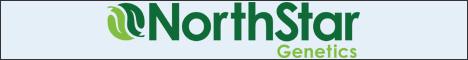 Norstar Genetics - один из лучших сидбанков Калифорнии