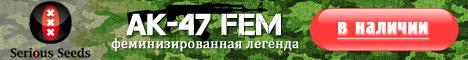 Феминизированные семена AK-47 от Serious Seeds в наличии!