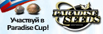 ����� ������� � Paradise Cup!