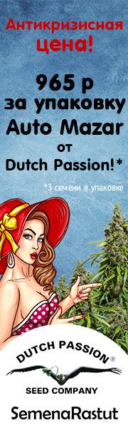 965 р за упаковку Auto Mazar от Dutch Passion!