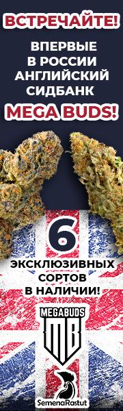 Mega Buds впервые в России!