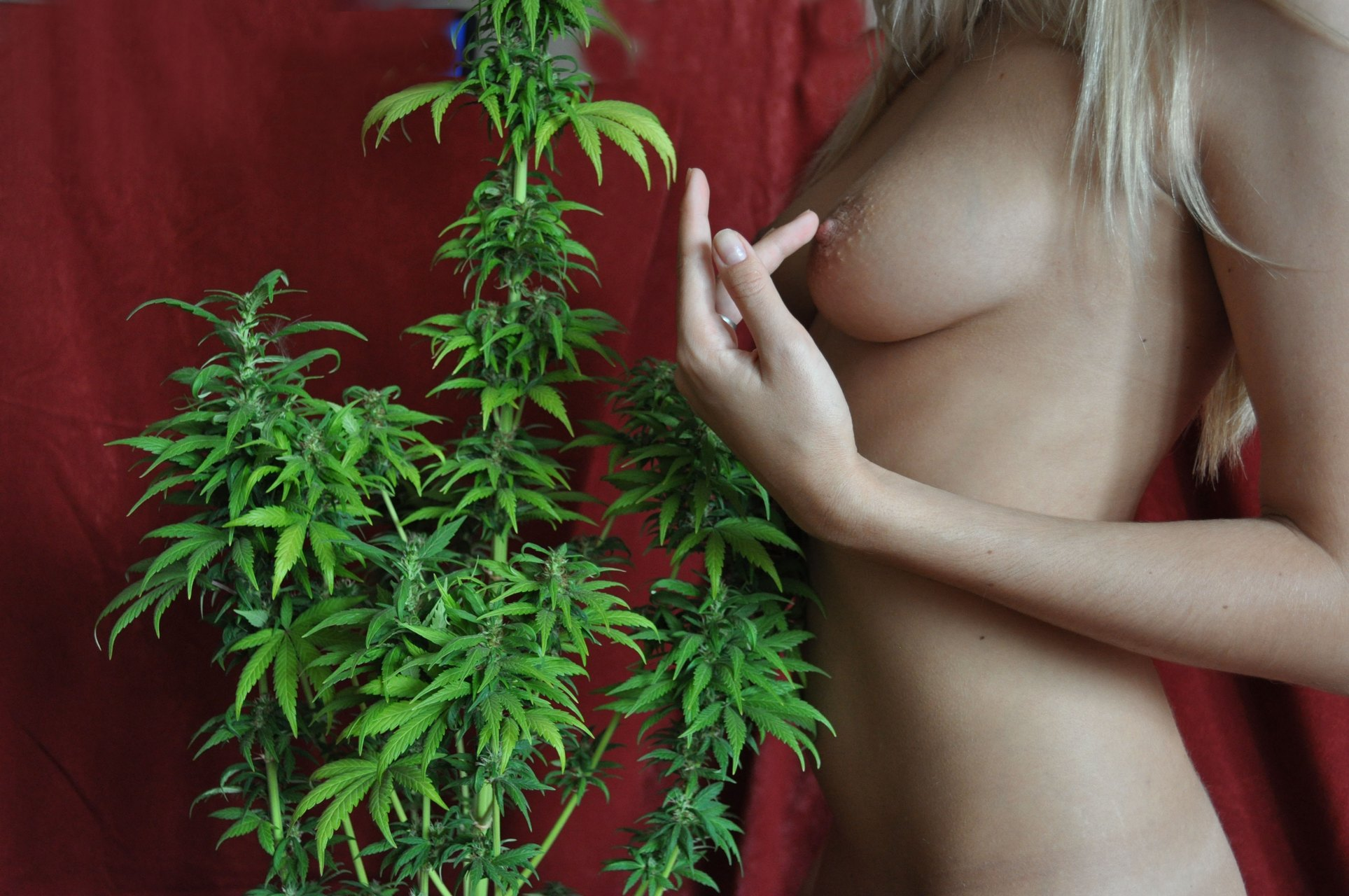Cannabis naked — photo 12
