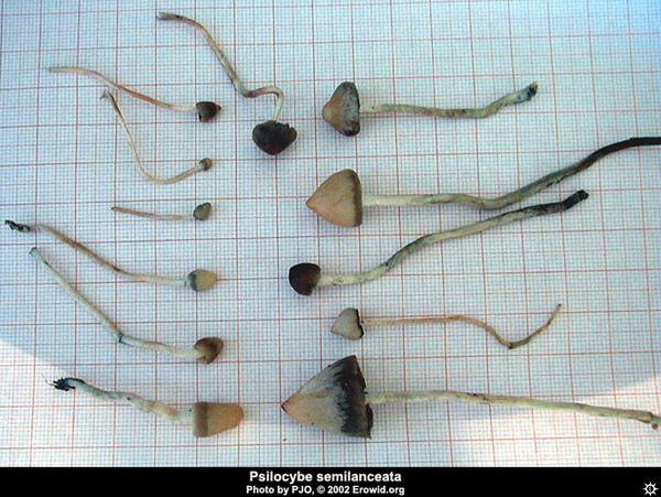 атлас грибов подмосковья фото