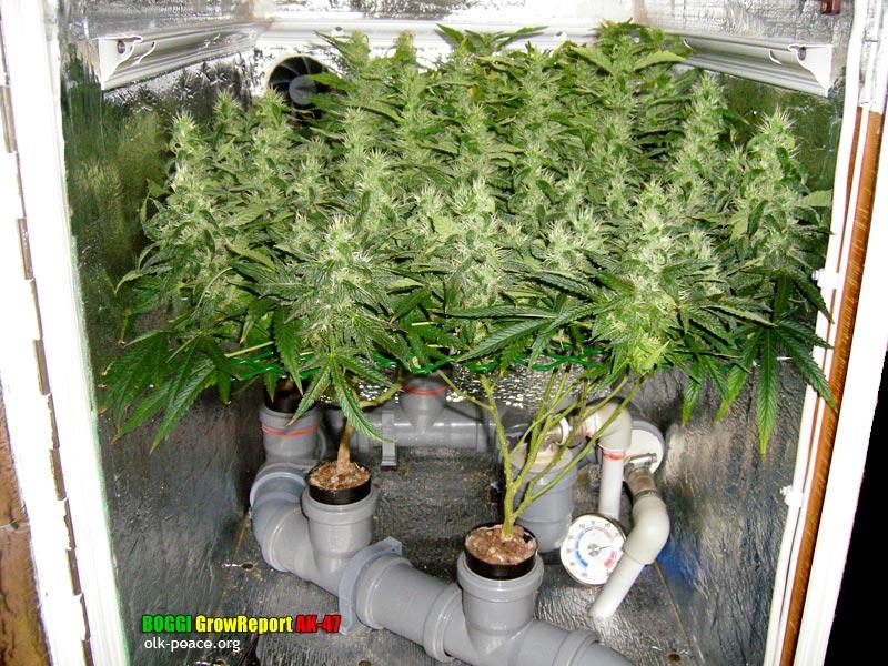Гроубоксы для выращивания травы 278