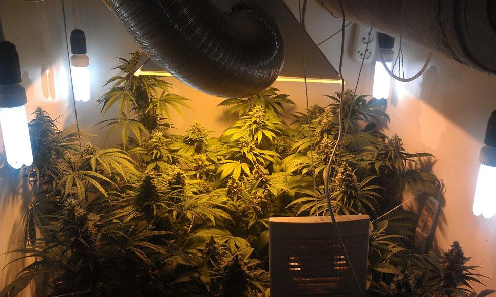 Шкаф для выращивания канабиса 94