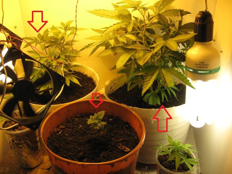 Флорист удобрение для конопли вывести марихуану из мочи чем можно