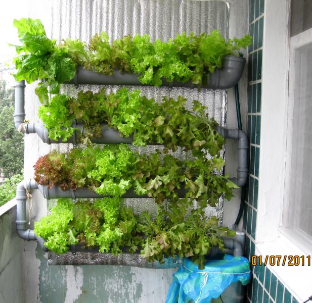 Мини-гидро-огород на балконе (закончен) :: просмотр темы :: .