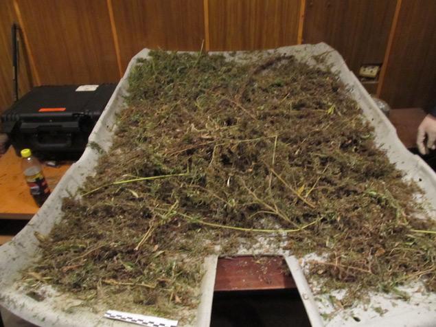 Арестованы сотрудники наркоконтроля :: Просмотр темы :: Общество Любителей Конопли