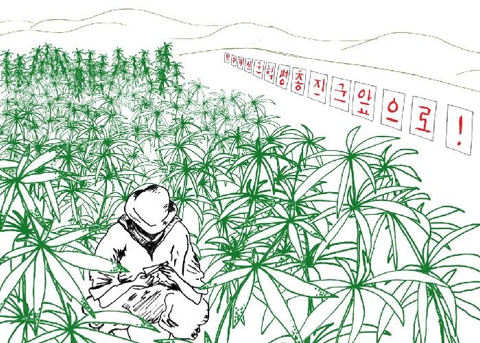 Конопля в северной корее купить зерна конопли в спб