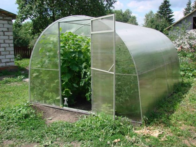 Марихуана в огороде как выращивать фото 95-889