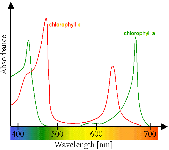 chlorophyll research paper Chlorophyll research paper - let the specialists do your essays for you authentic papers at moderate prices available here will make your studying into delight fast and trustworthy writings from industry top agency.